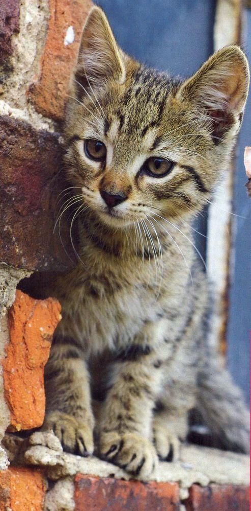 Gato a la fuga el cuidado de tu gato - Cuidados gato 1 mes ...