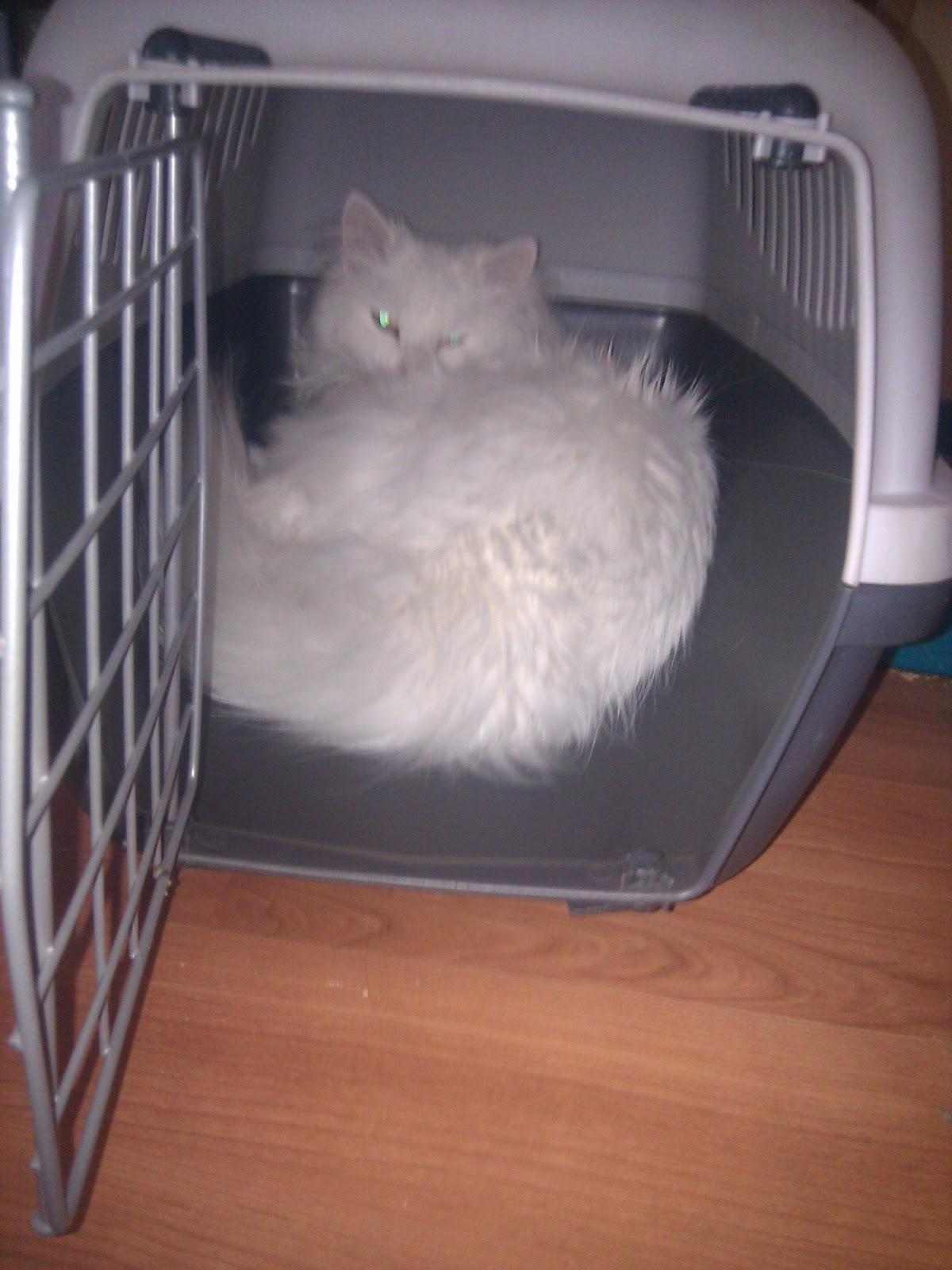 noviembre | 2011 | El cuidado de tu gato