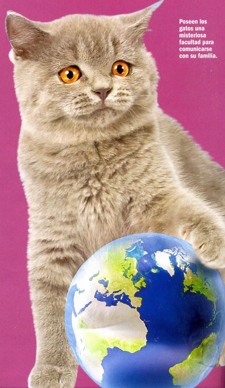 mtroya | El cuidado de tu gato | Página 14
