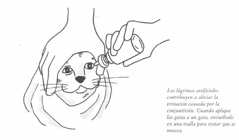 remedios caseros para curar conjuntivitis en gatos