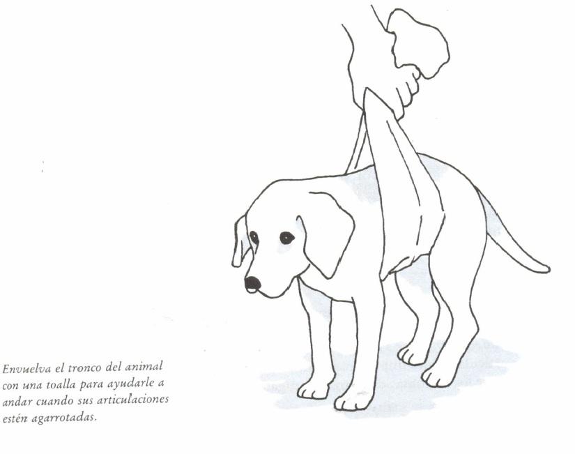 perro de próstata inflamado para la ventana
